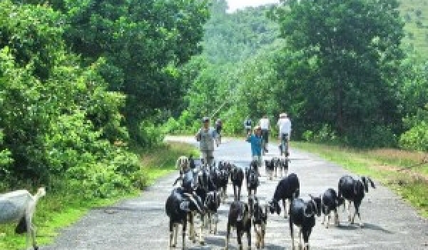 How to get to Nam cat tien national park from Ho Chi Minh City